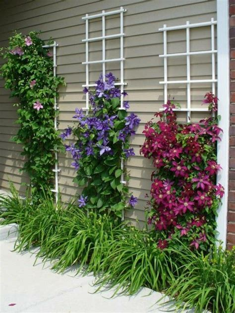 how to plant a backyard garden how to plant a flower garden in your backyard clematis trellis fence how to plant a