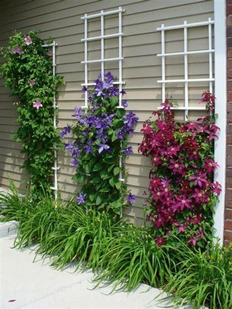 trellis florist best 20 climbing flowers ideas on climbing