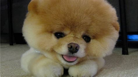 dogs facts 10 amazing facts about dogs