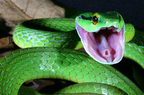 imagenes de serpientes verdes serpientes