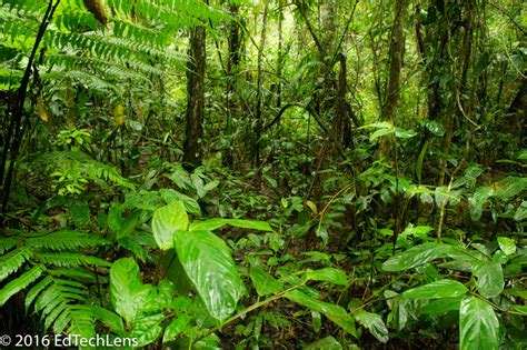tropical forest plant adaptations rainforest science for a fit leaf