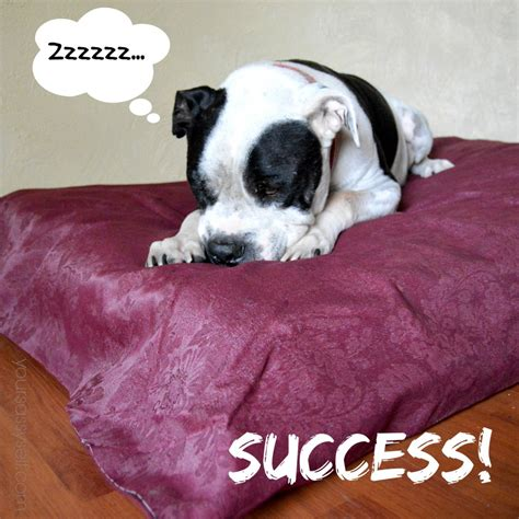 puppies do it yourself diy bed no sew buzzchatco do it yourself beds and costumes beds and costumes