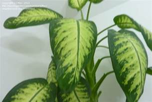 foliage house plant identification green house plant identification