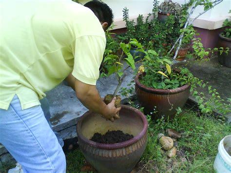 Kucing 3 Bulan Idaman keringat bio organic compost