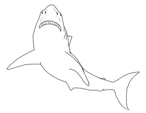 shark outline tattoo free printable shark coloring pages for