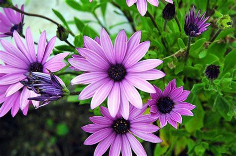 piante primaverili fiorite fiori primaverili fiori di piante tipologie fiori