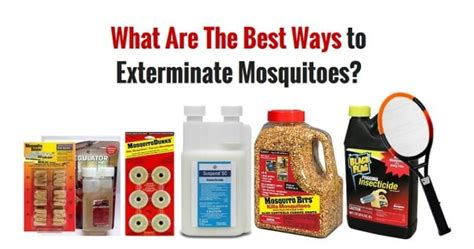mosquitoes in house how to get rid of mosquitoes 7 tried and true ways
