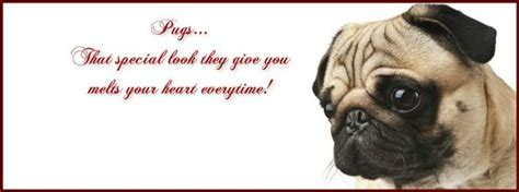 pug quotes pug cover photo for your timeline pug quotes pug covers