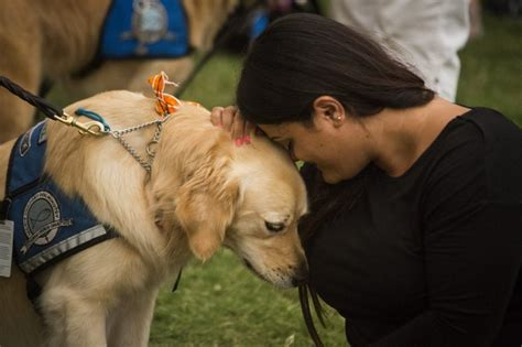 comfort pets comfort dogs deployed to console orlando shooting victims