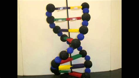 How To Make A Dna Model With Paper - how to make dna chain model
