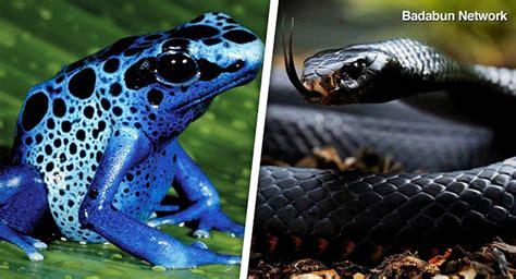 imagenes animales peligrosos fotos de los animales mas peligrosos del mundo