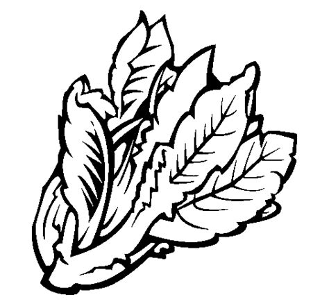 Colored Page Lettuce Ii Painted By Df Lettuce Coloring Page