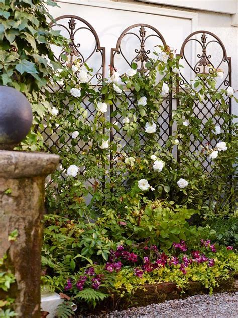 climbing plants for walls 25 best ideas about wall trellis on white