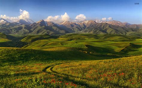 mountains poppys hills meadow wallpapers mountains