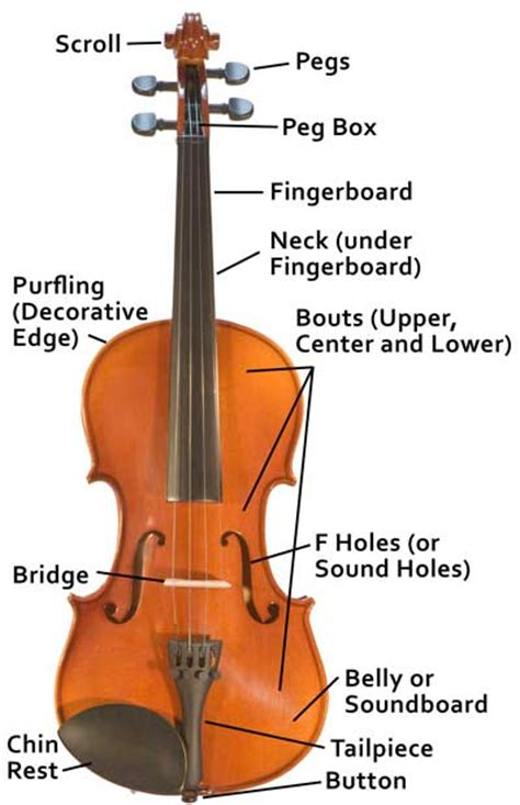 labelled diagram of a violin home www lesliejohnsonmusic