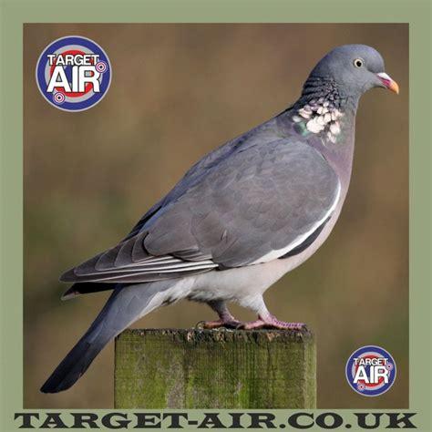 printable pigeon targets animal pigeon full colour airsoft bb gun shooting targets