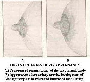 color changes during pregnancy second trimester of pregnancy signs and symptoms