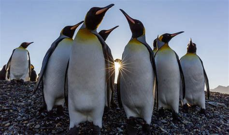 Penguin Top top ten facts about penguins express co uk