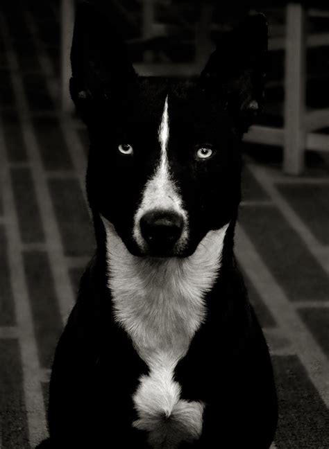 evil puppy evil by coussie on deviantart