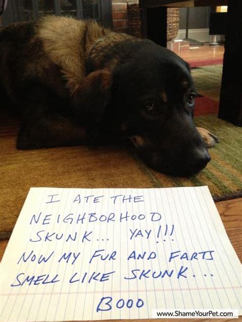 Dog Shaming Meme - shame your pet dog shaming cat shaming shame your
