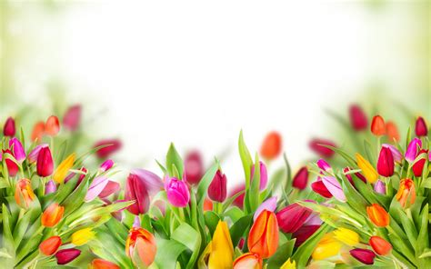 imagenes en 3d flores tulipanes en 3d hd 2560x1600 imagenes wallpapers