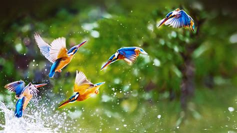 wallpaper birds birds flying wallpaper wallpapersafari