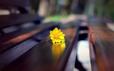 on the bench yellow flower on the bench 2560 x 1600 other