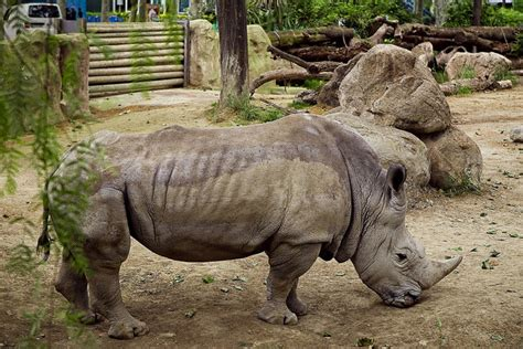 fotos animales zoo barcelona pasen y vean al unicornio