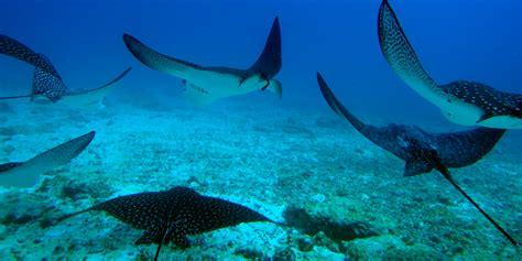dive galapagos scuba diving galapagos floreana island prices availability