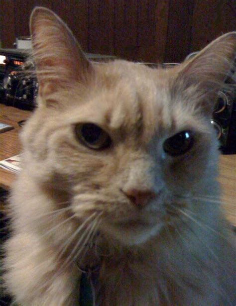 Universal Kitten universal radio customer cats w5xtl princess