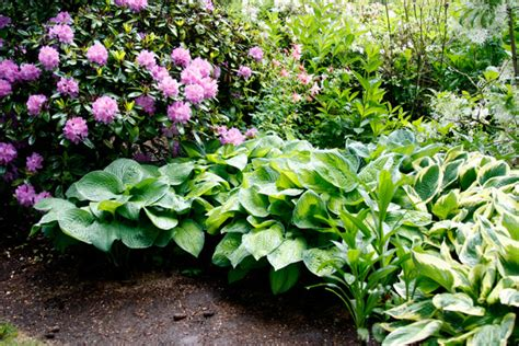 hosta garden layout hosta design 101 garden bulb flower bulbs garden