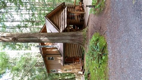 Forest Cabins Ashford Wa by Forest Cabins 22 Photos 15 Reviews Guest Houses