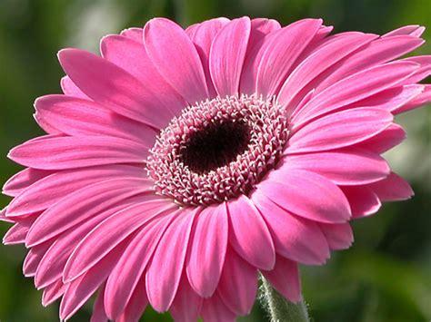 linguaggio fiori amicizia fiori dell amicizia fioraio merone