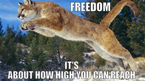 High Horse Meme - funny horse memes