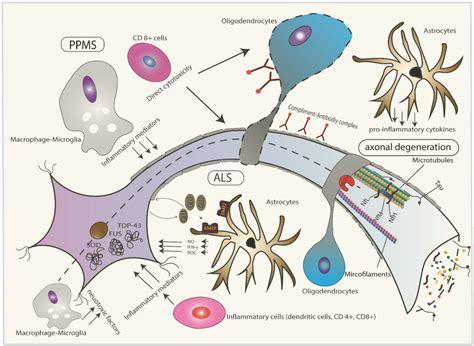 t protein csf ijms free text brain specific cytoskeletal damage
