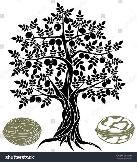 walnut tree coloring page walnut tree stock vector illustration 206735344 shutterstock