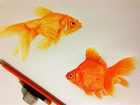 gold color pencil color pencil drawing gold fishes sketches and drawings