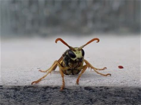 hausmittel gegen motten im schrank was tun gegen wespen stichhaltige tipps kinderoutdoor
