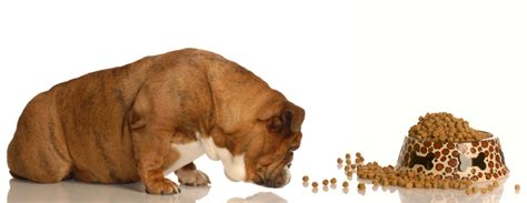 how often should i feed my puppy feeding tips how much and how often should i feed my can dogs eat this