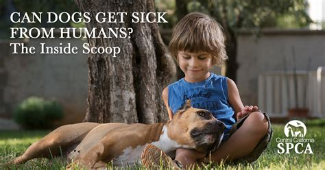 can dogs get sick from humans can dogs get sick from humans