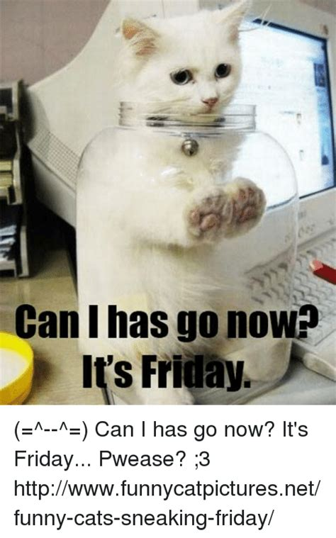 Shiny Friday Whats Going On At Nollie by 25 Best Memes About Cat Cat Memes