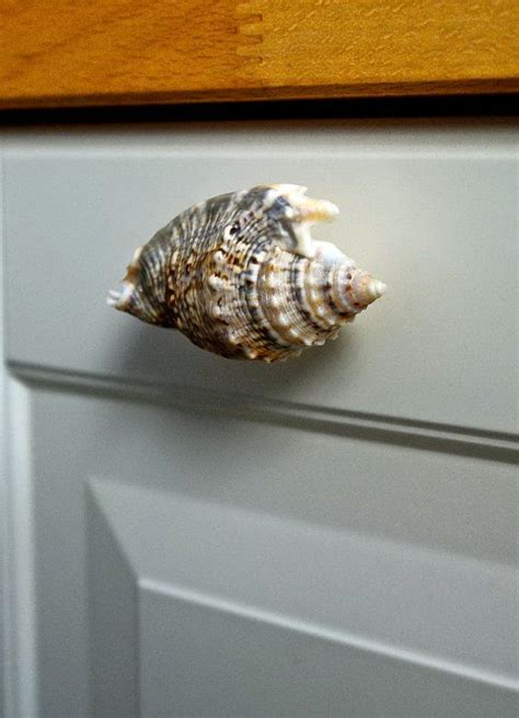 Seashell Drawer Knobs by Set Of 4 Sea Shell Knobs Sea Shell Cabinet Knobs