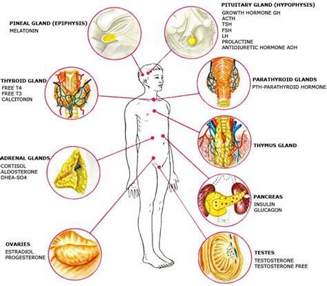 healthy fats hormones hormones and storage hormones