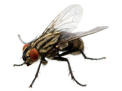 insetti volanti insetti volanti archivi sacitalia