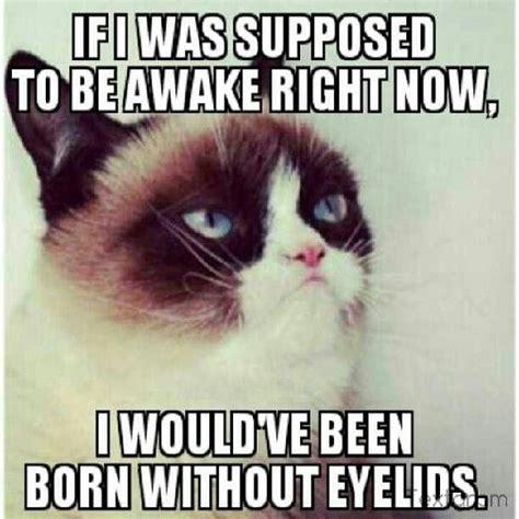 Grumpy Cat Sleep Meme - wake up grumpy cat funny pinterest cats wake up and