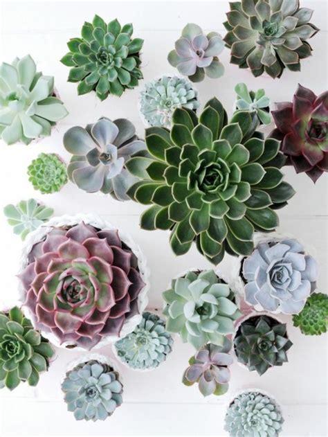 Sukkulenten Pflanzen by Sukkulenten Pflege Wie Pflegeleicht Sind Sukkulenten