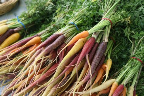 multi colored carrots to grow