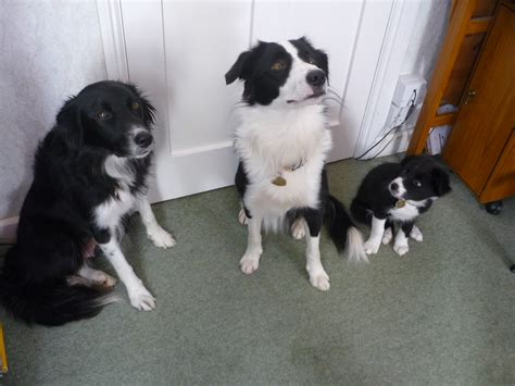 dogs home cornwall home boarding
