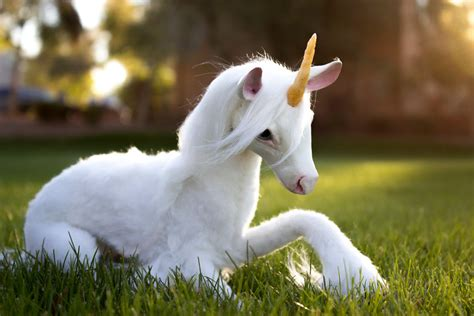 poseable doll unicorn handmade poseable unicorn by