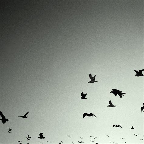 black and white wallpaper with birds flying birds black white ipad and ipad 3 wallpaper